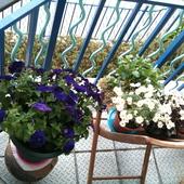 balkonowo....