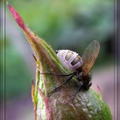 co to za owad?