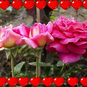 dla Zakochanych w kwiatach