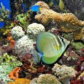 Fragment rafy koralowej z jej mieszkańcami :-)