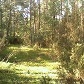 Leśna zieleń w słońcu skąpana.