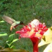 Nie motylek tylko