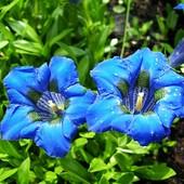 Niebieskości