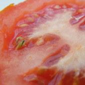 pomidor szaleje już kiełkuje ;)