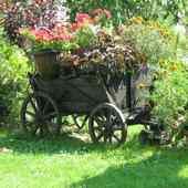 Wóz z kwiatami