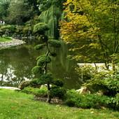 W Ogrodzie Japońskim we Wrocławiu