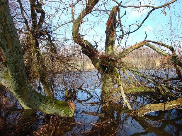 Dziwne  kształty drzew