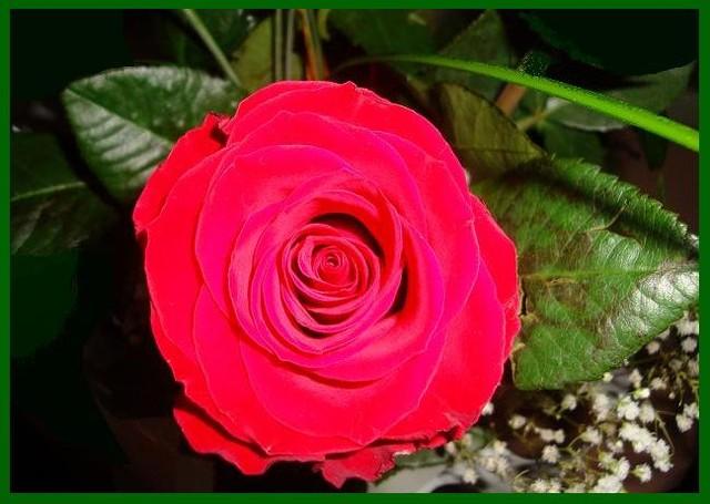 Róża dla Marty