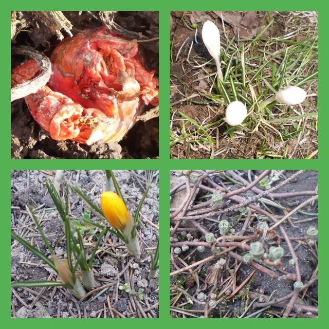 Wiosna...