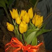 Czar tulipanków:)