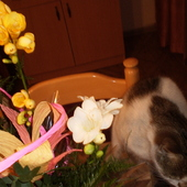 Inwazja kwiatów...