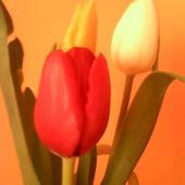 Nie tylko róże....:)