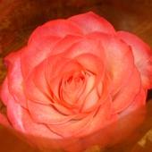 Różyczka :)