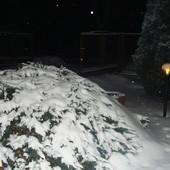 Ten sam jałowiec w zimowej szacie o nocnej porze