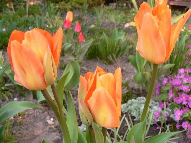 Dłuższe kwitnienie