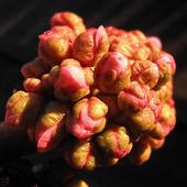 mózg - kwiatowy !