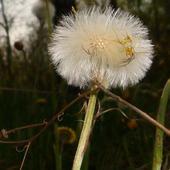 Wiosna pod lasem