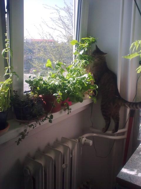 Pysia i zioła