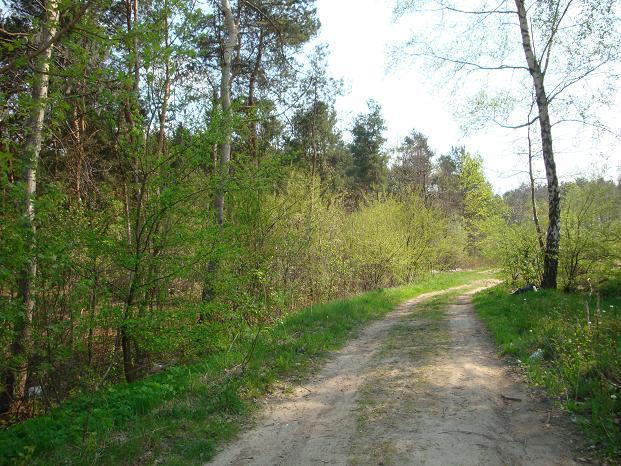Wiosną pod lasem