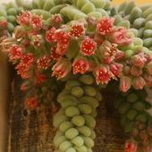 i takie to kwiatki!!