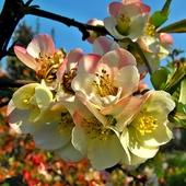 Kwiatki jak z lukru ;-)
