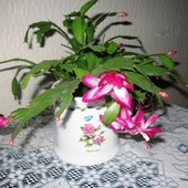 Moje kwiaty doniczkowe