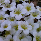 Mrowisko kwiatków ;)