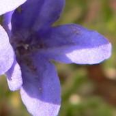 Obsypany drobnymi kwiatuszkami