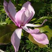 Ostatni kwiat