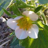 Owocowy kwiat ;)