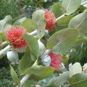 Roślina z ogrodu botanicznego