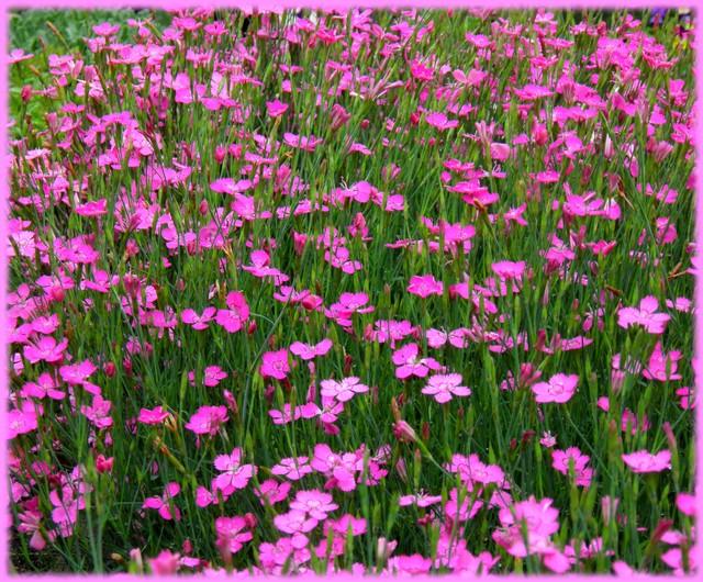 aby dzień był w różowych kolorach