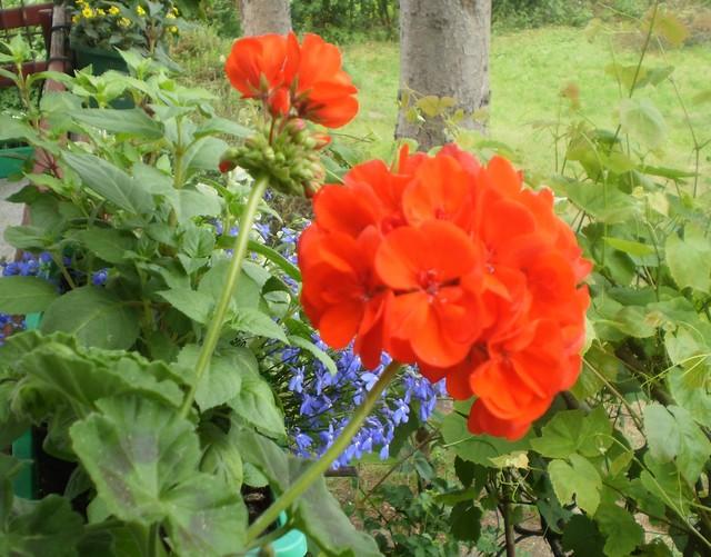 Czerwony, zielony, niebieski:)