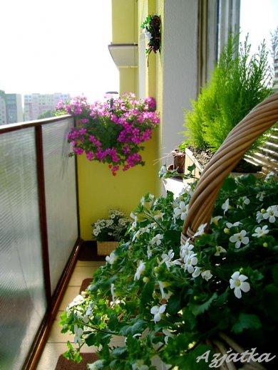 Mój maleńki balkon