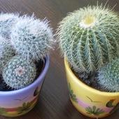 Kaktusiki:)