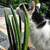 Ulubione kocie wykałaczki ;-)