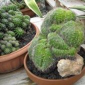 Były i kaktusy pokaźnych rozmiarów :)