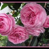 Dobranoc, różowych snów :)