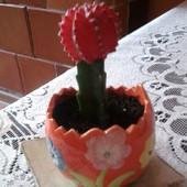 Kaktus Szczepiony