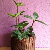 Kolekcja roślin powiększona - \
