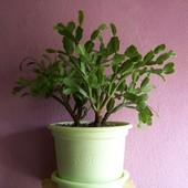 Kolekcja roślin powiększona -