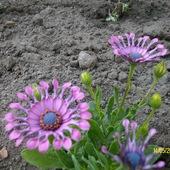 Kwiatek z kosmosu :)))