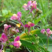 Kwiatki Z Ostrogami
