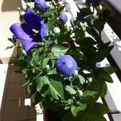 Niebieskawo...