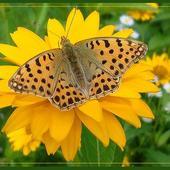 Słońce, kwiaty i motyle