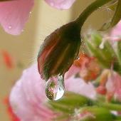 Upragniony deszcz