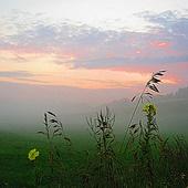 w mgle wieczornej ............