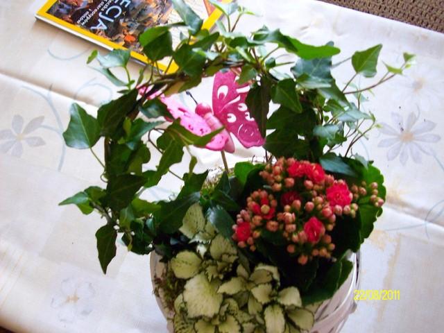 Dawno po imieninach a kwiatki nadal piękne :)