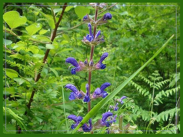 Leśne kwiatki