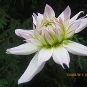 I z pąku zamieni się w kwiat...